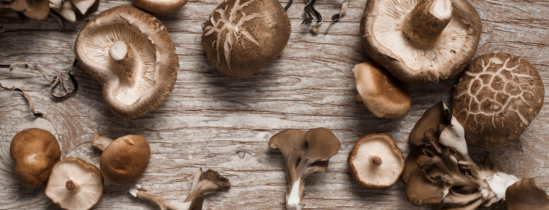 GOURMET DRIED MUSHROOMS
